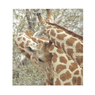 Niger, Koure, two Giraffes in bushes in the west Notepad
