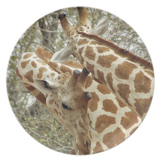 Niger, Koure, two Giraffes in bushes in the west Plate