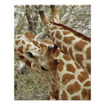 Niger, Koure, two Giraffes in bushes in the west Poster