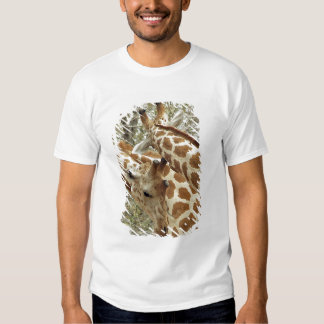Niger, Koure, two Giraffes in bushes in the west Tshirts