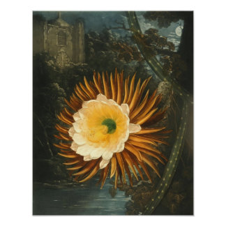 Night-Blooming Cereus Vintage Flower  Thornton Poster