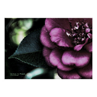 Night Camellia Poster