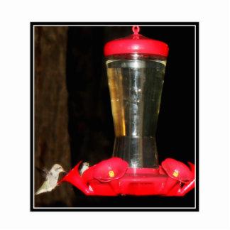 Night Feeding Hummingbirds Standing Photo Sculpture