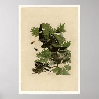 Night Hawk Print