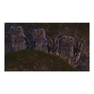 Night Owls Photo Print
