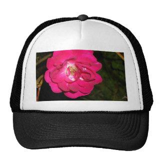 Night Rose CricketDiane Art & Photography Cap