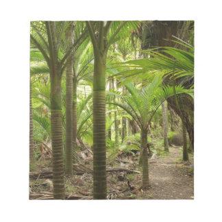 Nikau Palms, Heaphy Track, near Karamea, Notepad