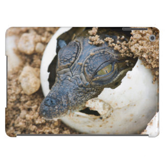 Nile Crocodile Hatchling Emerging From Egg iPad Air Covers