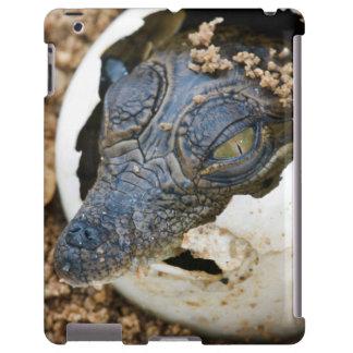 Nile Crocodile Hatchling Emerging From Egg iPad Case