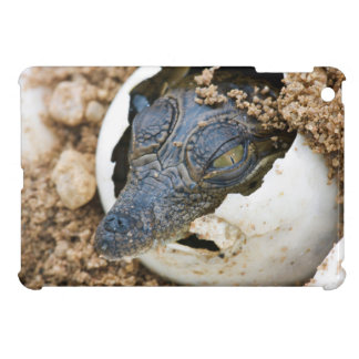 Nile Crocodile Hatchling Emerging From Egg iPad Mini Cover