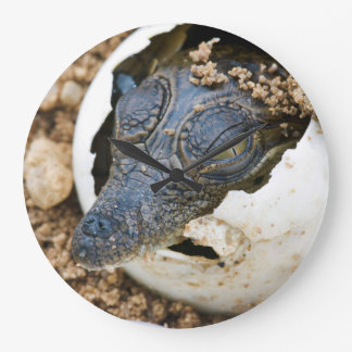 Nile Crocodile Hatchling Emerging From Egg Large Clock
