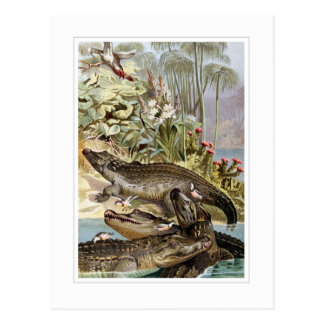 Nile Crocodile Postcard