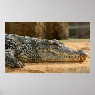 Nile Crocodile Poster
