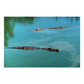 Nile Crocodiles Poster