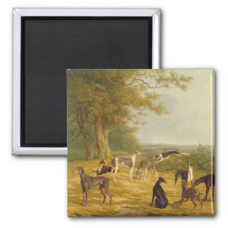 Nine Greyhounds in a Landscape (oil on canvas) Magnet