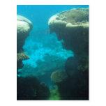 Ningaloo Reef Post Card