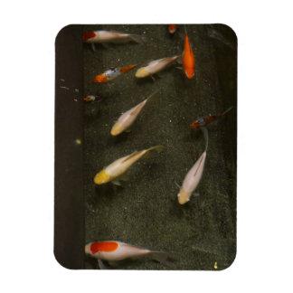 Nishikigoi (Koi Fish) Magnet