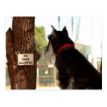 NO DOGS ALLOWED POST CARDS