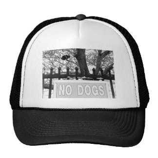 No Dogs Mesh Hats