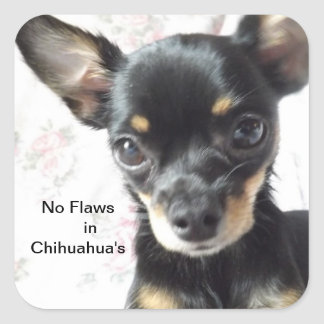 No Flaws In Chihuahua s Stickers