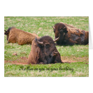 No flies on you on your birthday - Birthday Card