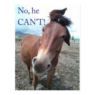 No he CAN'T! Donkey Postcard