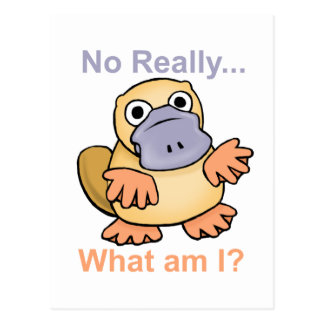 No Really... What am I? Platypus Postcard
