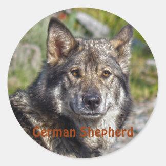 Noble German Shepherd Wolf-like Pose Round Sticker