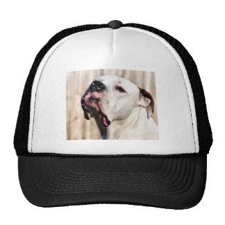 Noble Hat