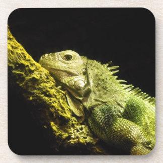 Noble Iguana Coasters Set