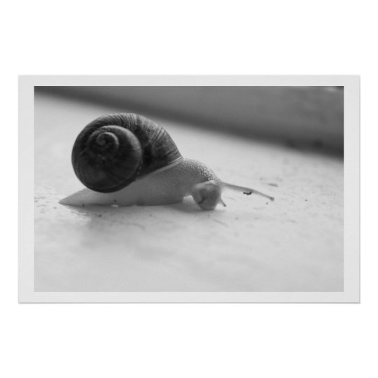 Nocturmia Photography Black and White Snail Poster