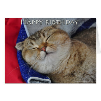 Noodles the Scottish Fold Cat is sleeping Greeting Card