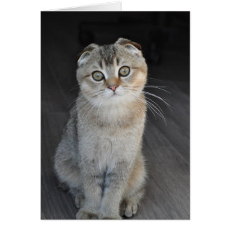 Noodles the Scottish Fold looking innocent Greeting Card