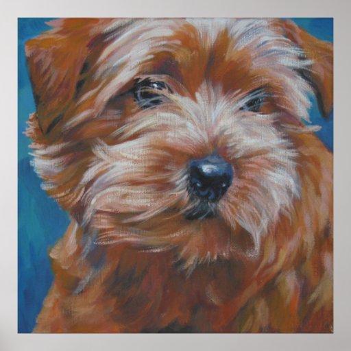 norfolk terrier art print poster