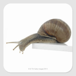 Normalsnail Square Sticker