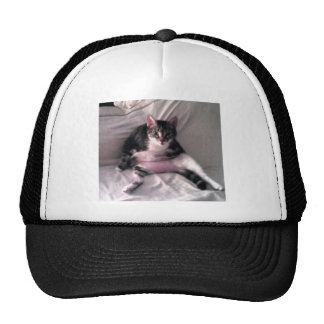 Norman the cat hat