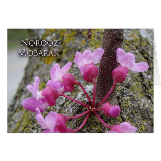 Norooz, Redbud Tree in Bloom, Spring Photograph Card