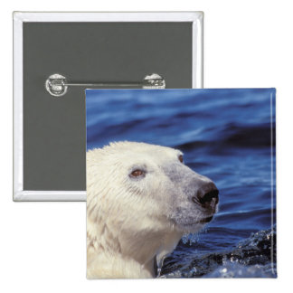 North America, Arctic Circle. Polar bear 15 Cm Square Badge