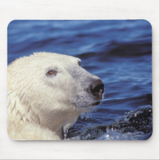 North America, Arctic Circle. Polar bear Mouse Mat