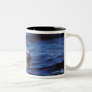 North America, Arctic Circle. Polar bear Two-Tone Coffee Mug