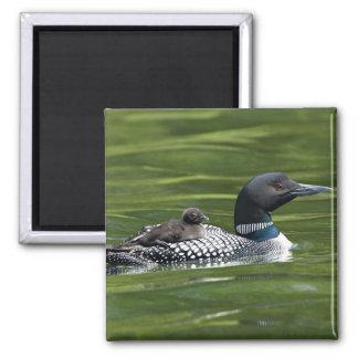 North America, Canada, British Columbia, Lac Le Square Magnet