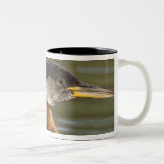 North America, Canada, British Columbia, Logan 2 Two-Tone Coffee Mug
