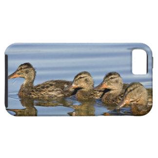 North America, Canada, British Columbia, Logan iPhone 5 Case