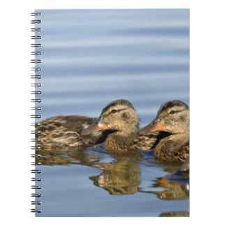 North America, Canada, British Columbia, Logan Notebook