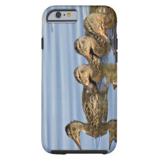 North America, Canada, British Columbia, Logan Tough iPhone 6 Case