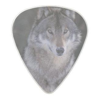 North America, Canada, Eastern Canada, Grey wolf Acetal Guitar Pick