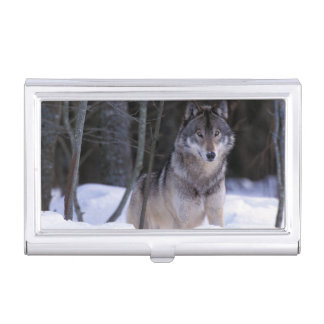 North America, Canada, Eastern Canada, Grey wolf Business Card Holder