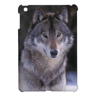 North America, Canada, Eastern Canada, Grey wolf Cover For The iPad Mini