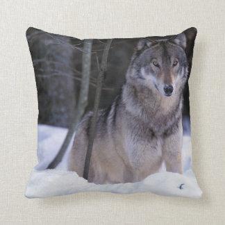 North America, Canada, Eastern Canada, Grey wolf Cushion