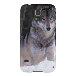 North America, Canada, Eastern Canada, Grey wolf Galaxy S5 Case